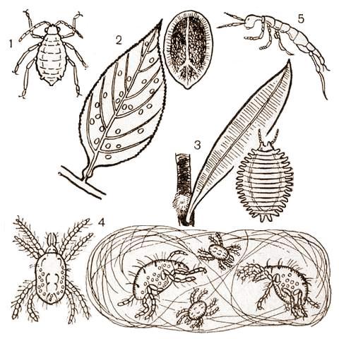 Комнатные растения белые черви в