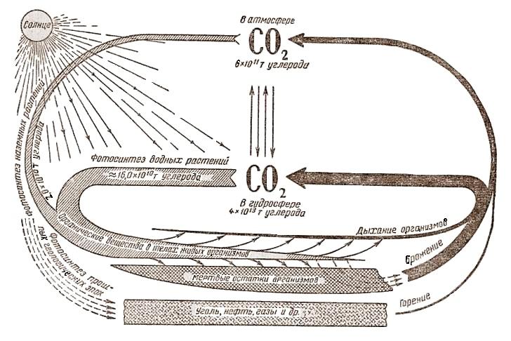 Круговорот углерода в природе